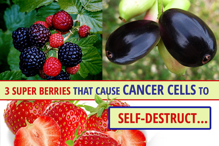 Image result for blueberries are good for diabetes and cancer