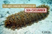 Sea-Cucumber-final