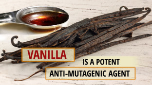 Vanilla is a Potent Anti-Mutagenic Agent