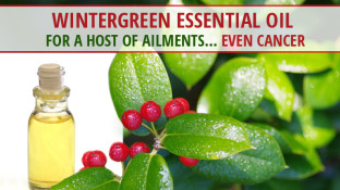 Wintergreen Essential Oil for a Host of Ailments... Even Cancer