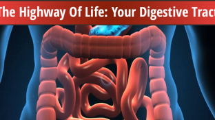 The Highway Of Life: Your Digestive Tract
