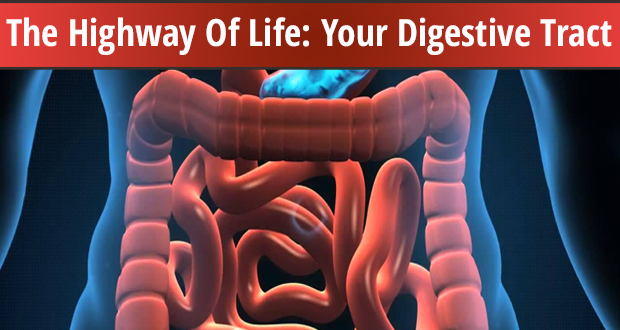 The Highway Of Life Your Digestive Tract
