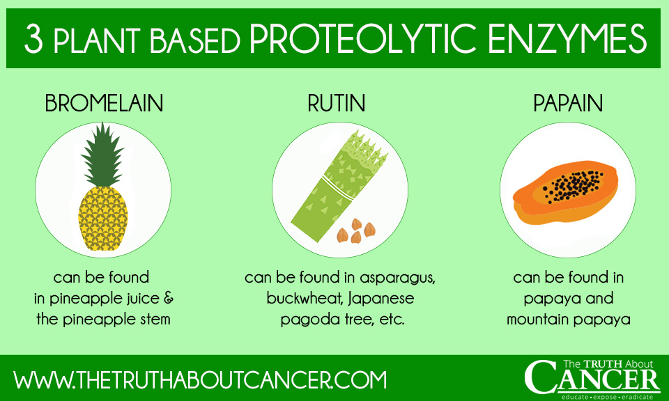 3 plant based proteolytic enzymes