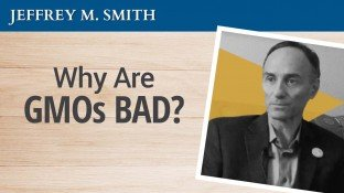 Jeffrey Smith: Why Are GMOs Bad? (video)