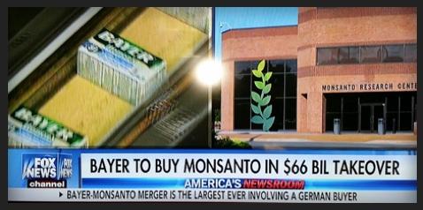 Bayer Monsanto Merger Fox News