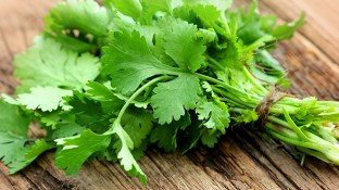 Cilantro: Love It or Hate It, This Healthy Herb Can Do the Body Good