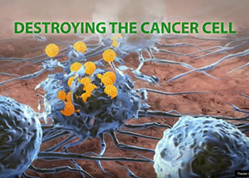 Destroying the Cancer Cells