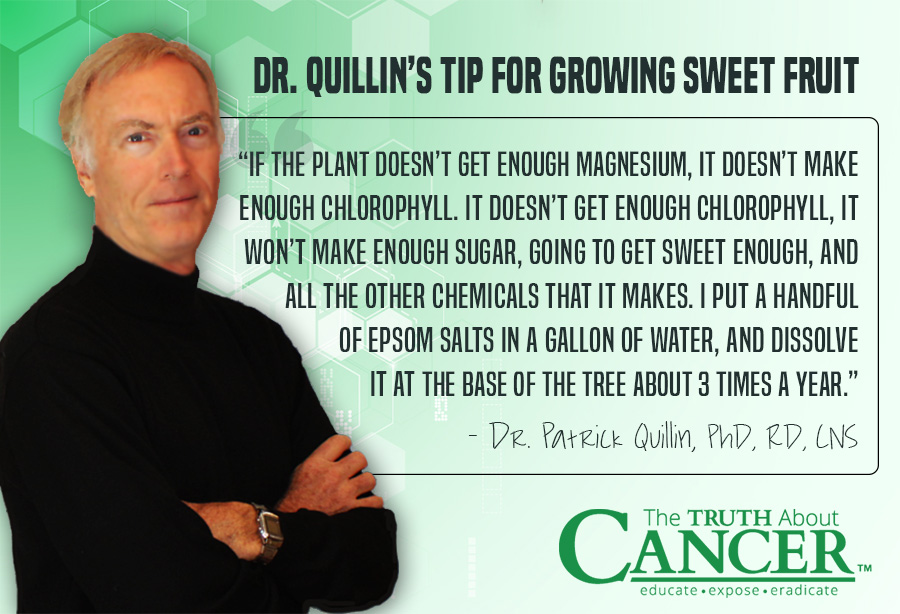 """If the plant doesn't get enough magnesium, it doesn't make enough chlorophyll...."" - Dr. Patrick Quillin about Organic Gardening in the desert. Click on the Quote to watch the video interview."