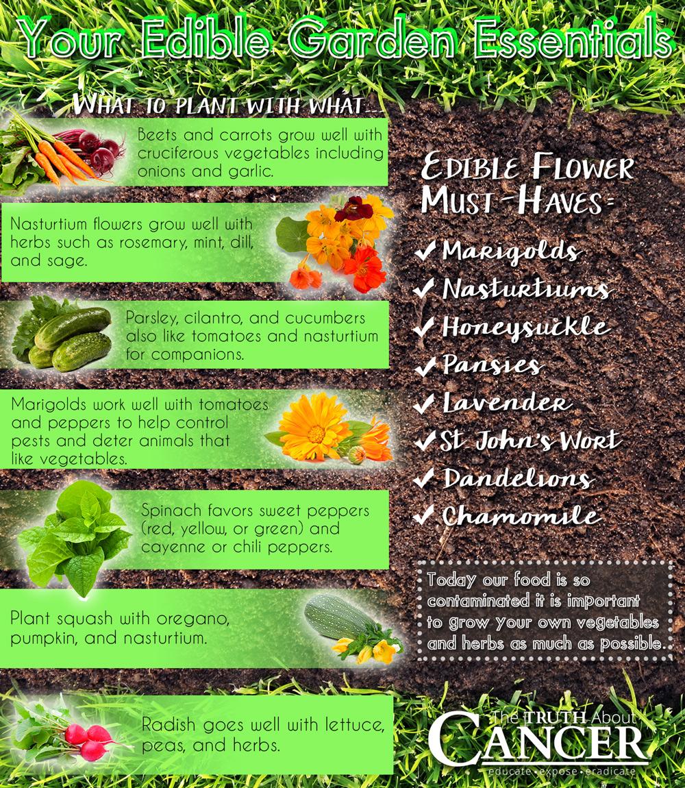 edible-landscape-companion-plants