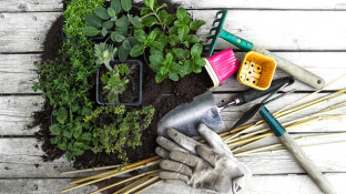 How to Plan an Anti-Cancer Edible Landscape