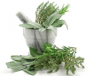 Herbs, including rosemary, thyme, basil, and sage inhibit BCL2 gene activity that stimulates cancer cell growth