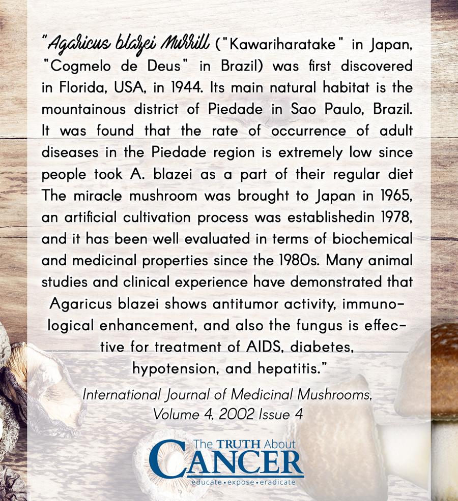 Agaricus Blazei Murill Quote by International Journal of Medicinal Mushroom