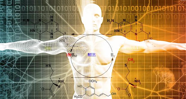 MTHFR甲基化癌網絡