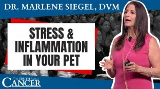 How Stress & Inflammation Affect Our Pets (& How to Lower Them!) - video
