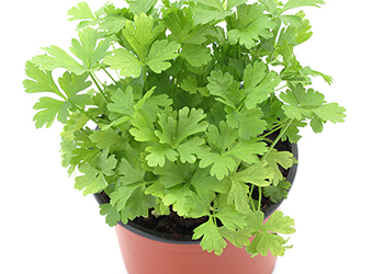 Parsley contains apigenin which helps kill cancer cells