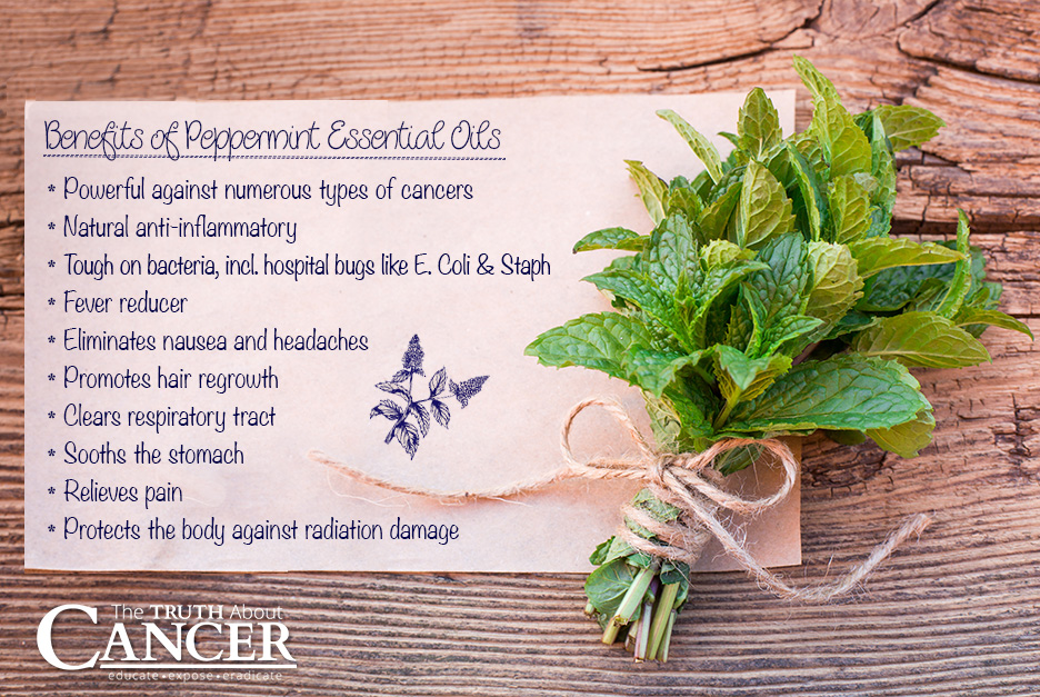 Peppermint-essential-oil-benefits-2