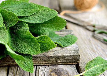 Sage contains high levels of phytoestrogens which can help to safely block estrogen receptors