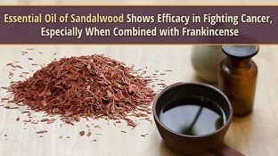 Essential Oil of Sandalwood Shows Efficacy in Fighting Cancer, Especially When Combined with Frankincense