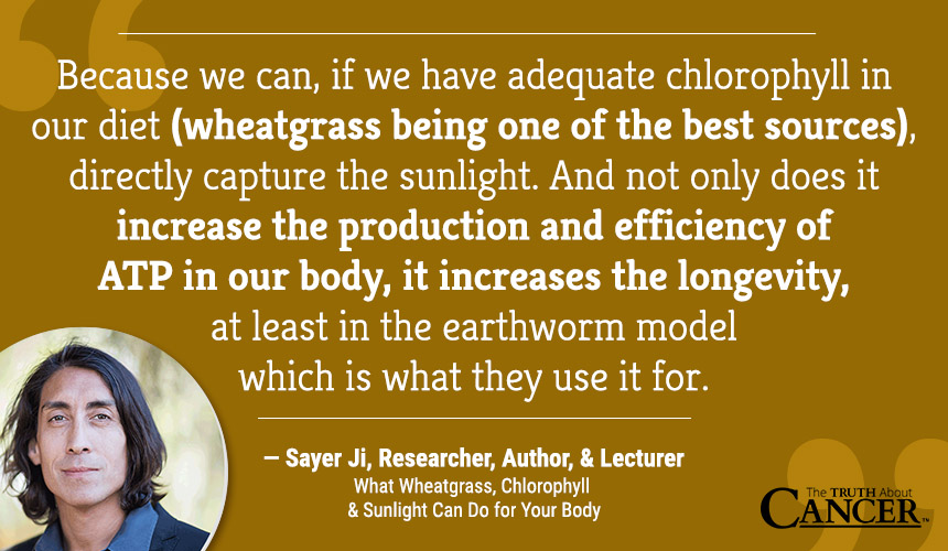 Sayer Ji-Wheatgrass-Chlorophyll-Sun-Quote