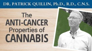 The Anti-Cancer Properties of Cannabis (video)