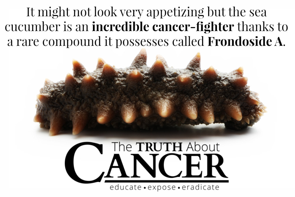 Anti-Cancer-Sea-Cucumber