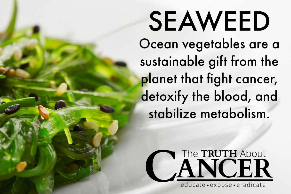 Kelp and cancer