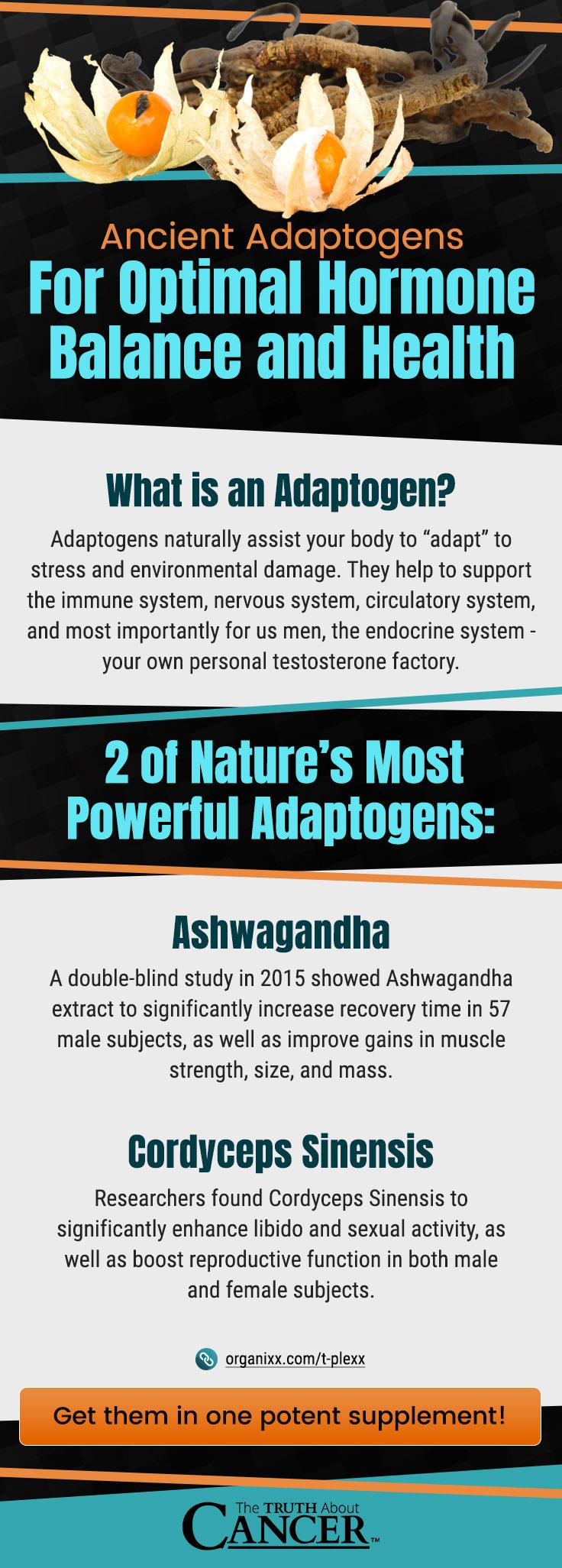 Testosterone Balance - Infographic2