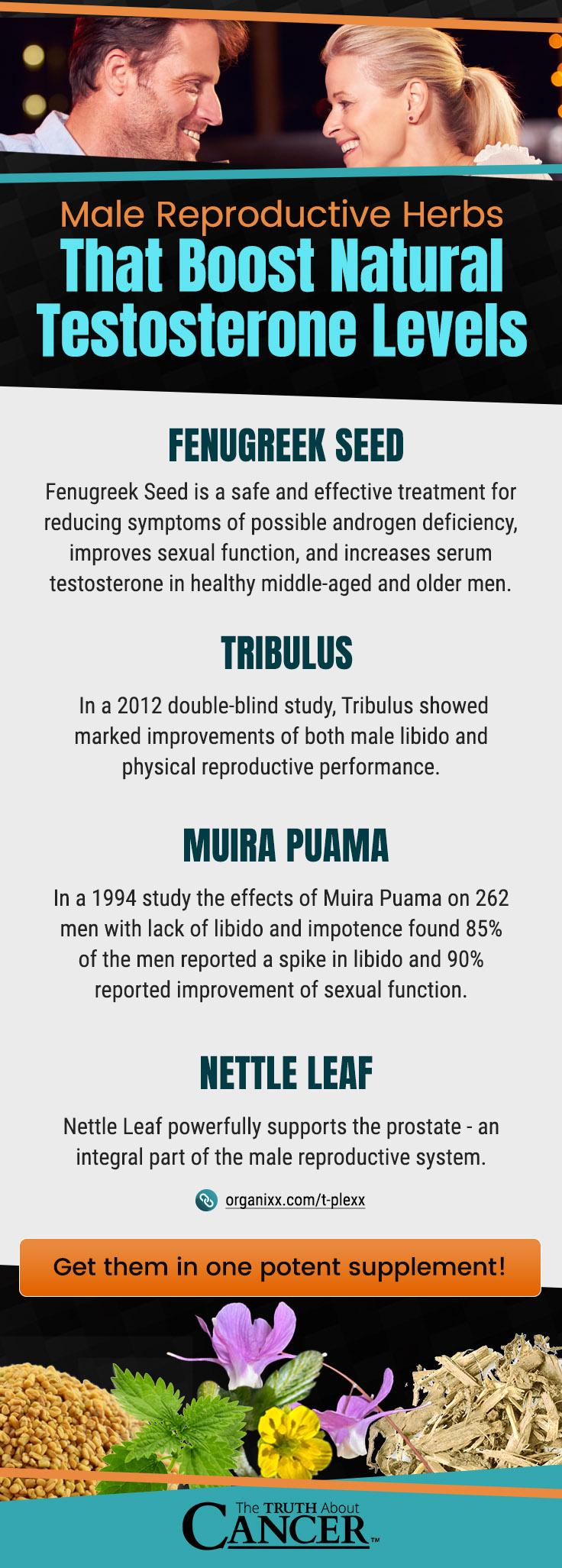 睾酮 - 圖表2