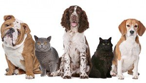 There are approximately 12 million diagnosed cases of canine and feline cancer in the U.S. every year