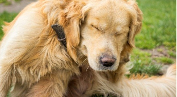 Toxins Pet Flea & Tick Treatments