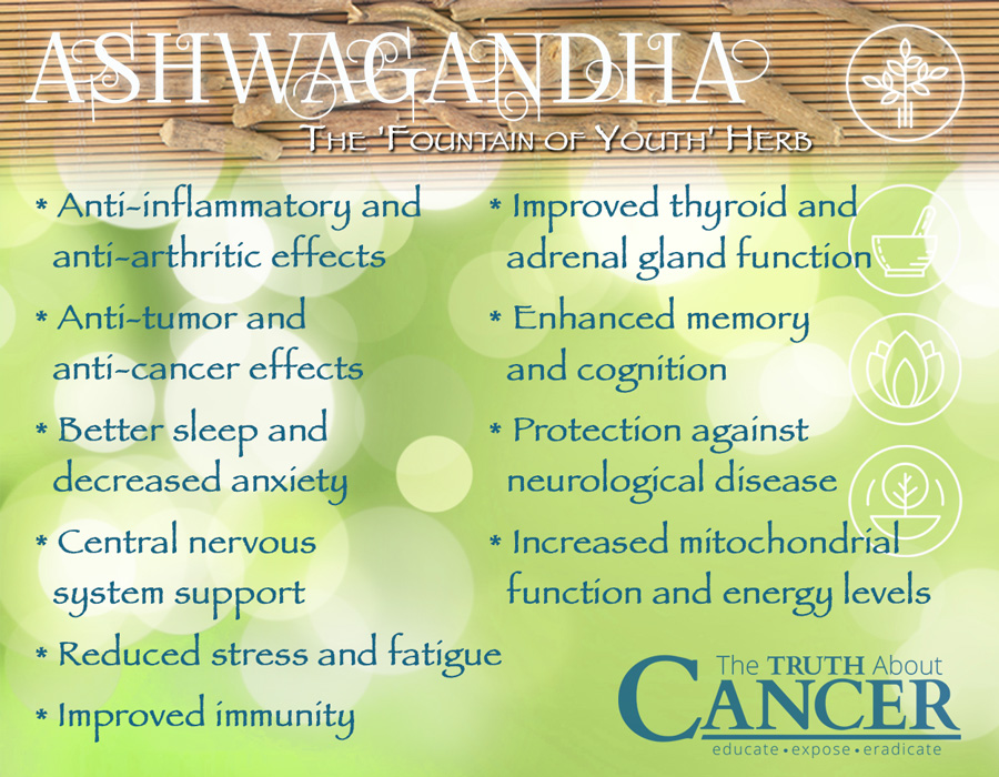 Is Ashwagandha Good What For It