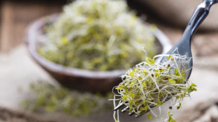 How to Grow Broccoli Sprouts at Home (an Anti-Cancer Diet Essential)