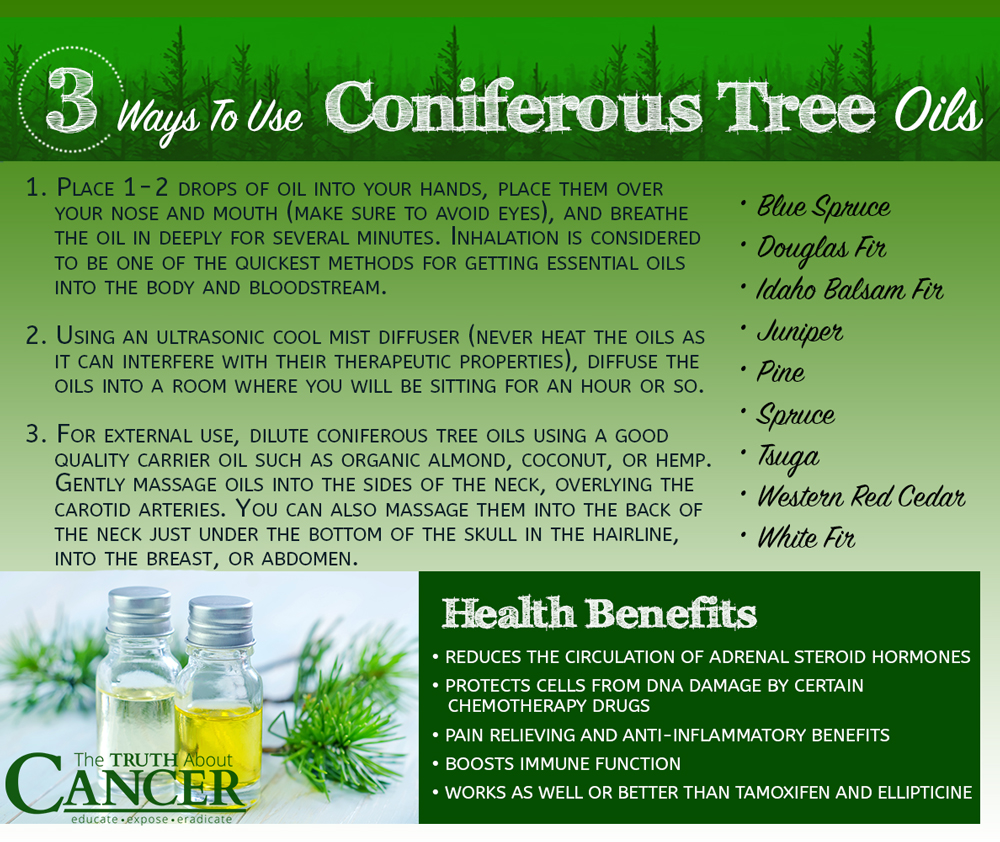 How can adenoids be cured with thuja oil