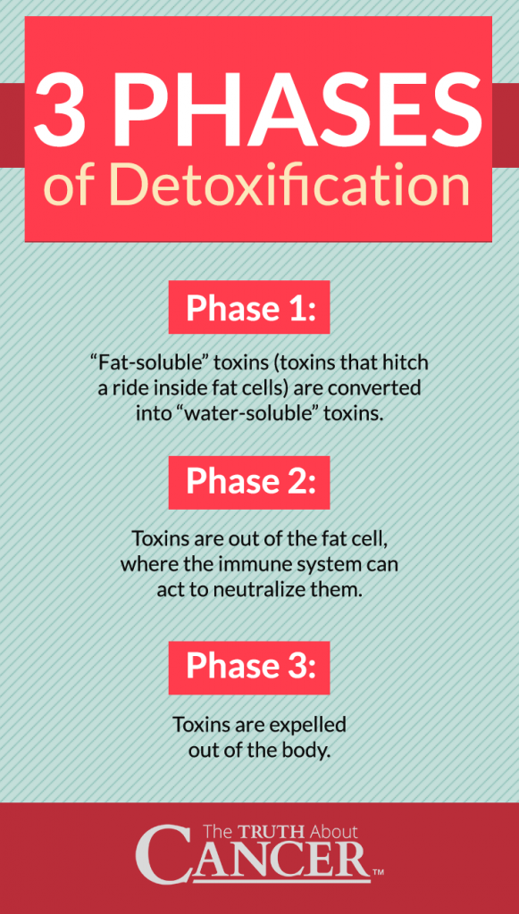 detox-for-weight-loss-Infographic2