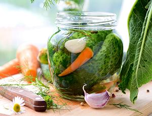Making pickling cucumbers
