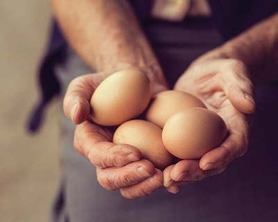 two hands holding eggs