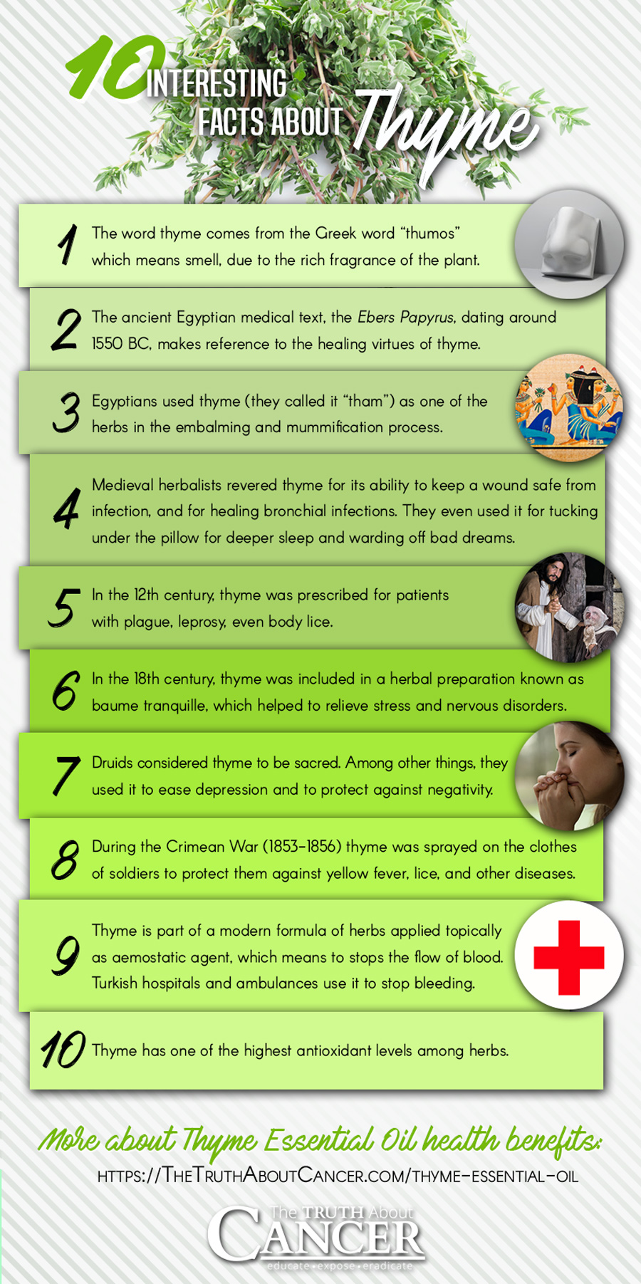 Here are 10 interesting Thyme facts - by The Truth About Cancer // to learn more about the amazing health benefits of Thyme Essential Oils, click on the image above.