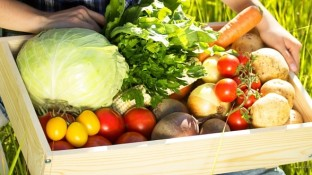 Fight Back Against Monsanto GMO Food with Your Own Organic Garden