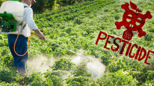 "Pesticides and Cancer: The ""Love Affair"" Continues"