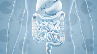 Prebiotics and Probiotics: Why You Need Both For a Healthy Gut