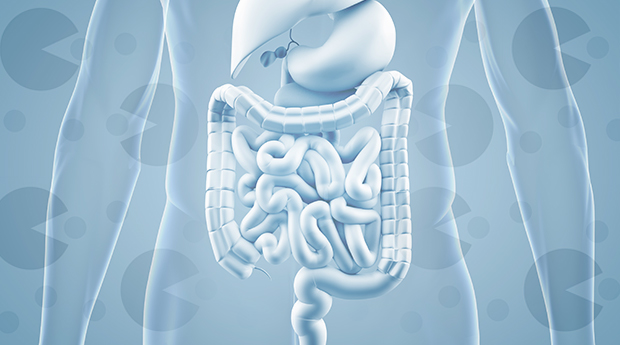 prebiotic-probiotic-gut-health