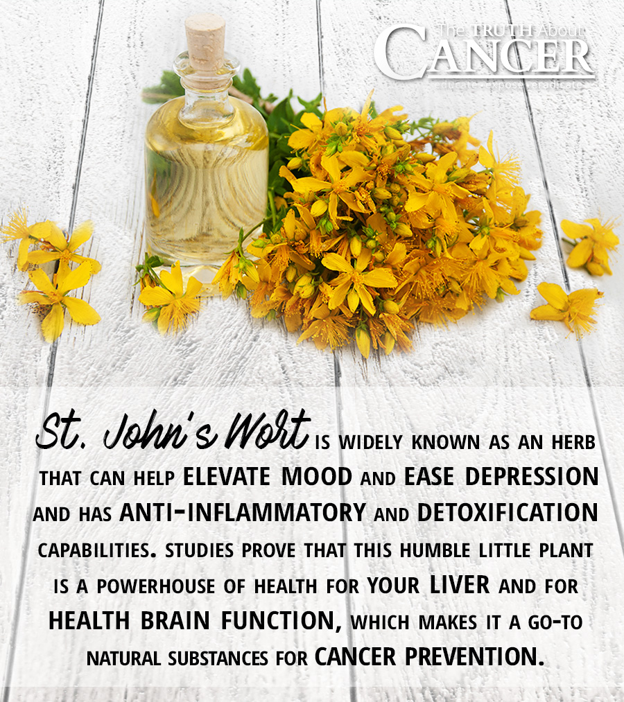 St. Johns Wort Plant Health Benefits Pinterest