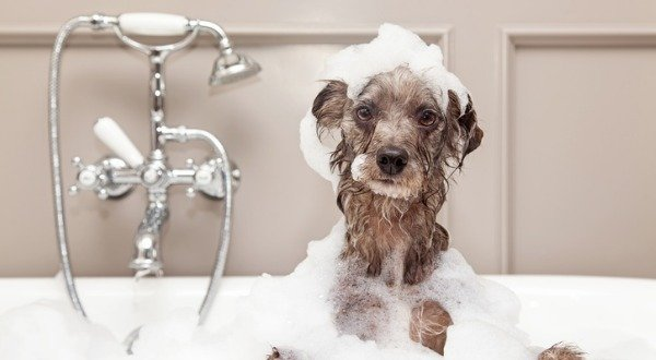 toxic dog grooming products