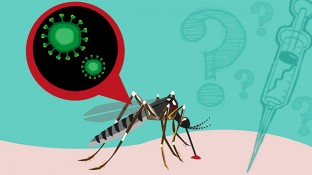 The Truth About the Zika Virus Health Scare (Part 1 of 2)