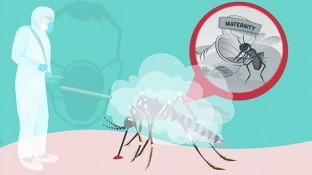 The Truth About the Zika Virus Health Scare (Part 2 of 2)